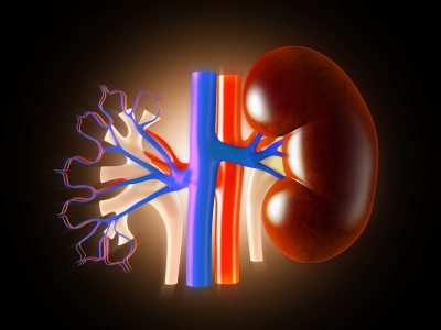 Kidney And Urinary Tract Disorders